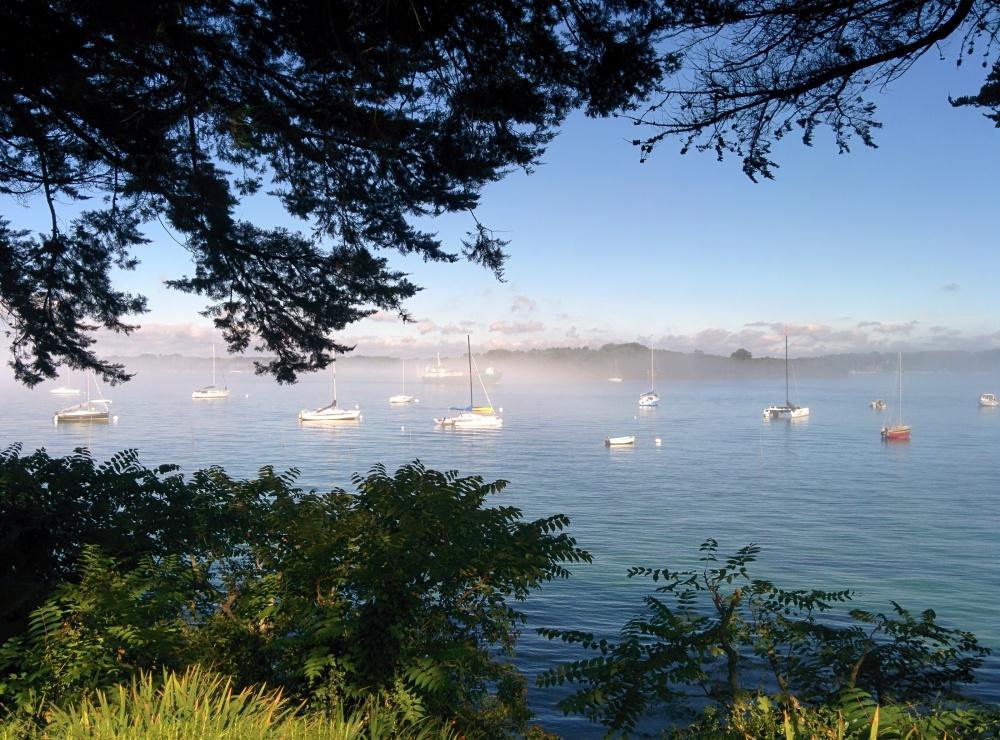 LouBay sort des brumes matinales à l'Ile aux Moines (Golfe du Morbihan)