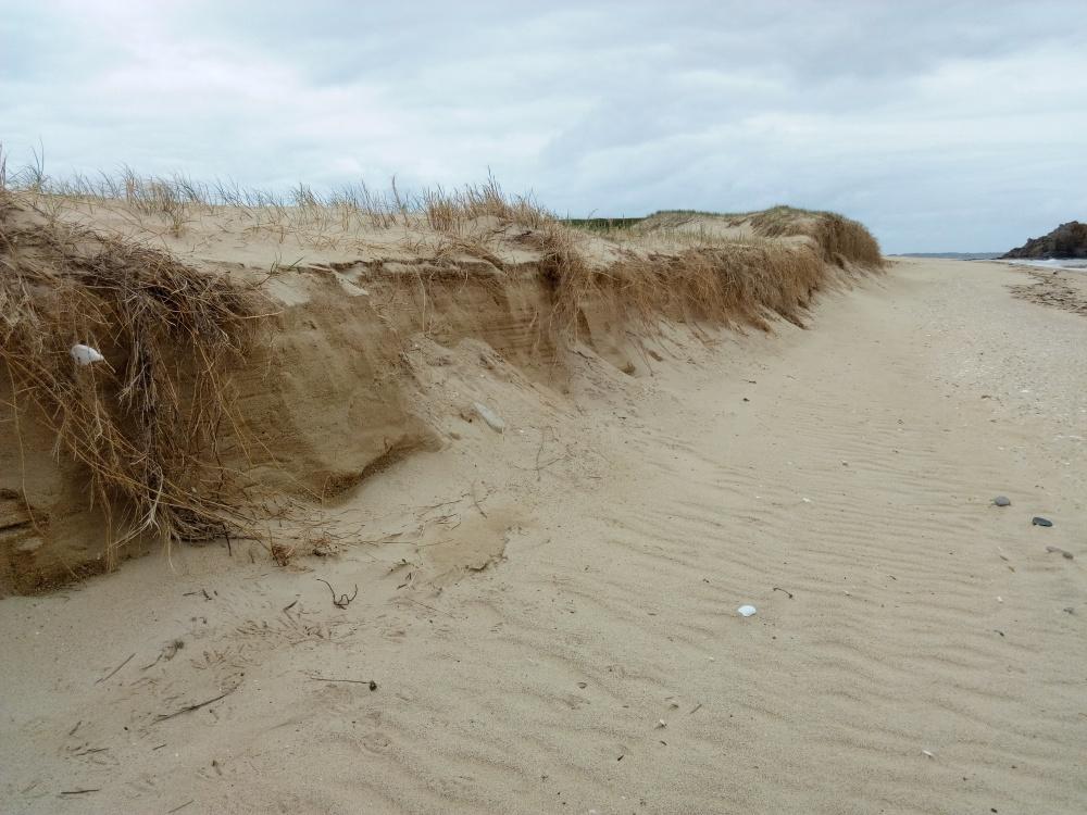 Dune de la pointe d'Ental (Houat)